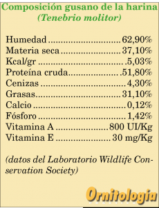 Composición del tenebrio molitor o gusano de la harina - www.ornitologiapractica.com
