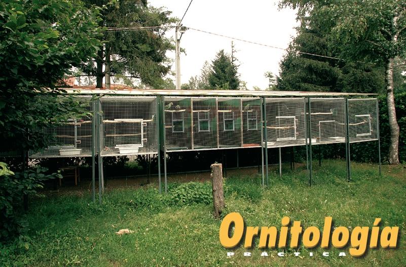 Jaulones exteriores para Psitácidas de talla media. Criadero: EsseCiParrots. Foto: Alcedo.