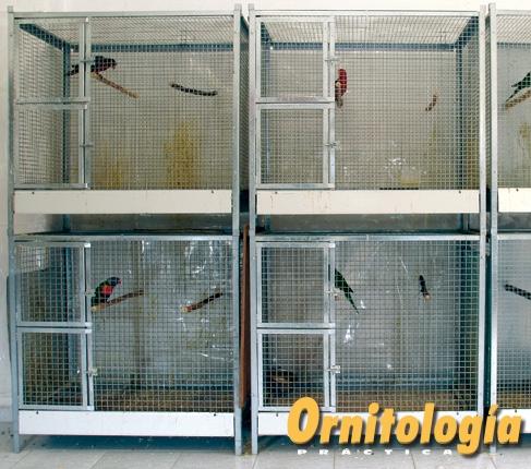 Jaulones interiores para Loris. Criadero: L. Crosta. Foto: Alcedo.