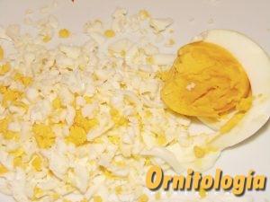 El huevo tiene el mejor perfil de aminoácidos esenciales para nuestras aves. - Ornitología Práctica